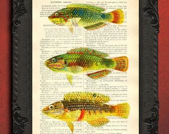 Fish illustration yellow fish green fish print on dictionary paper