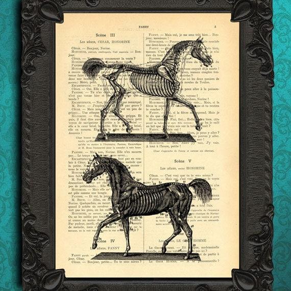 Anatomic horse print horse art print horse skeleton illustration