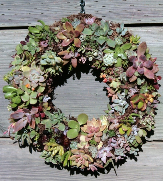 Living Succulent Wreath