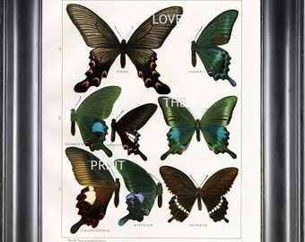BUTTERFLY PRINT SEITZ  Art Print 4 Beautiful Antique Butterflies Nicconicolens and Borealis Aqua Green Brown Summer Garden Nature