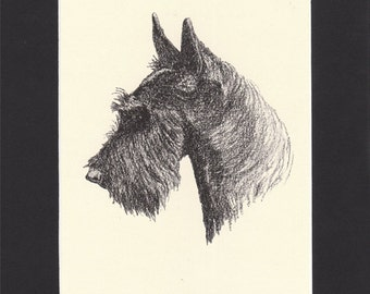 Scottish Terrier Vintage Scottie Dog Print C.Francis Wardle Genuine 1935 Drawing Print Mounted with Mat Scottie Print Scottish Terrier Print
