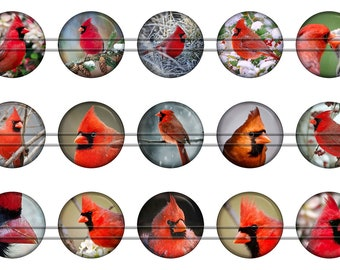 Cardinals (birds) - 1 inch rounds graphics for scrapbooking, stickers, Digital Printable Bottle Cap Images File 4x6