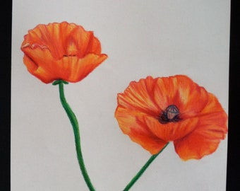 Original Colored Pencil Poppy Drawing