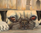 "Apricot Pie 7"" x 7"" Print of pug looking under fence."