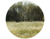"""Meadow Photograph, Flowers, Summer, Happy, Green, Circular Landscape Photograph, 8x8"""" - Cornflowers and Daisies"""
