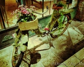 Creepshow Ivy Vines Bicycle Fantasy Nature Green Print Photo Decor iPhoneography Basket Flowers