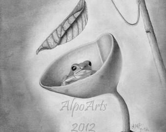 Adler Bleistift Zeichnung Realistische Tierwelt Zeichnen Mit