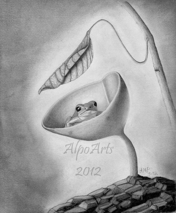 8x10, frog pencil drawing, charcoal drawing, fine art print, wall art, animal art, wildlife art, mushroom, 11x14 photo mat, black and white