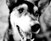 "Black and White Dog Photograph 8""x12"" - Spaghetti Smiling"