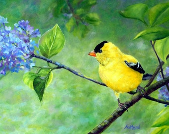 Among the lilacs, Goldfinch Giclee canvas print