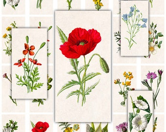 Botanica Domino Digital Collage Sheet for Scrapbooking Altered Art Victorian Style / DO1