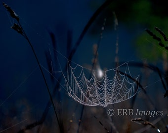 Moonlit Web - Fine Art Photography - Spider web with dew in the moonlight -DIGITAL DOWNLOAD ONLY