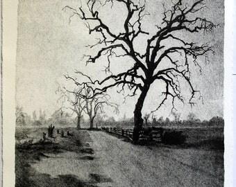 Stone litho landscape oak tree