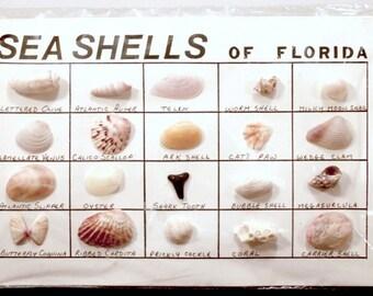 Sea Shell Specimen Card