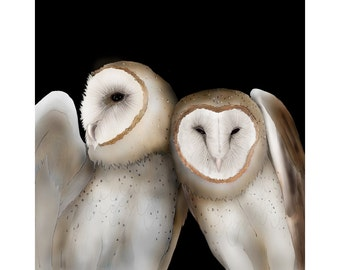 Barn Owl 20 signed fine art print 8x8 Bird lover gift Nature