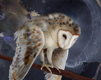 Barn Owl 22 signed fine art print 9x12 Bird lover gift Nature