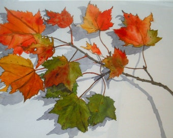 Autumn Maple Branch