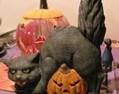 Halloween: Scary cat on pumpkin