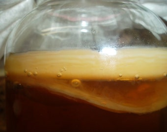 Kombucha Scoby Mother Cultures