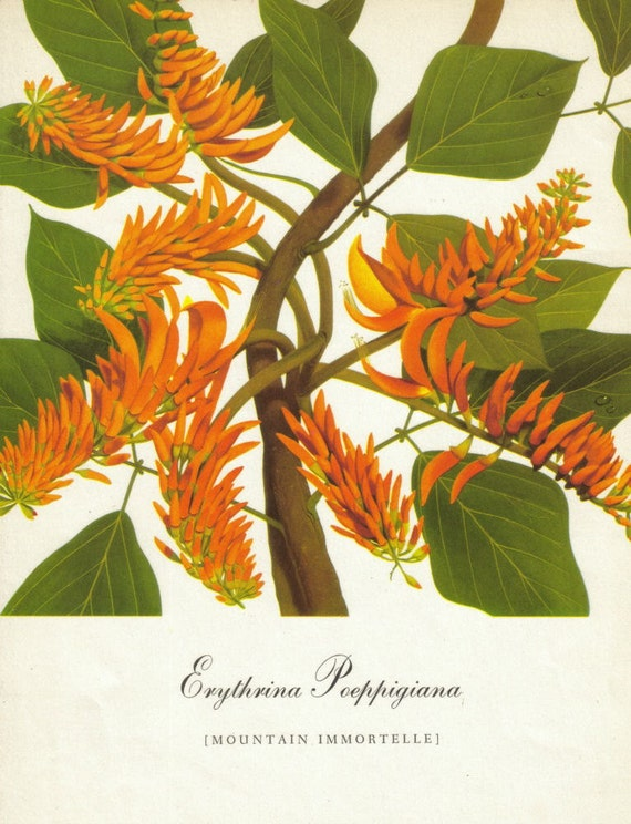 Botanical Print Set Orange Flower Floral Vintage Decor Tropical Home Decor