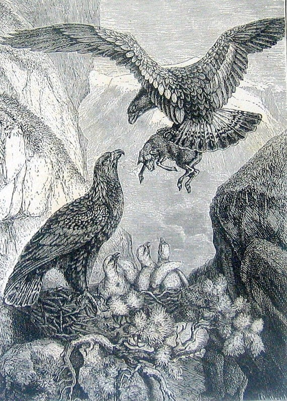 1880 Golden Eagle and Its Nest Bird Illustration Black and White Vintage Antique Book Plate