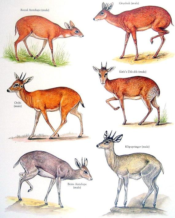 Running Shoes Red Deer