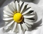 NEWLY REDUCED Sweet Daisy Brooch