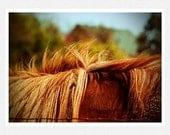 Southwest Photography, horse, mane, blue, Home on the Range, fine art photography print