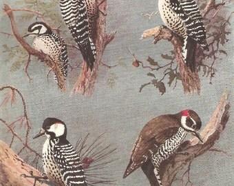 Vintage Bird Print, Book Plate, Woodpeckers, Nuttall, Arizona Woodpecker, Allan Brooks, Antique Bird Illustration, 1930s