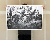 Bird Colony - 24x36 Plotter Poster