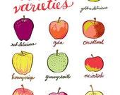 apple varieties - apple print - original illustration - giclee print