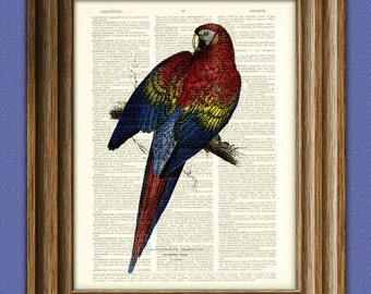 RED And BLUE MACAW parrot bird beautifully upcycled vintage dictionary page book art print