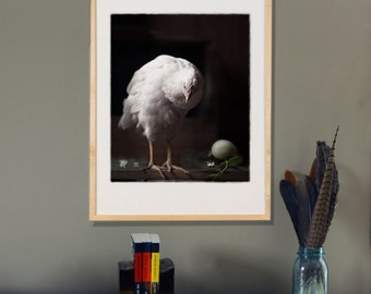 Animal Photography  Black and White Photograph of a White Hen with an Egg