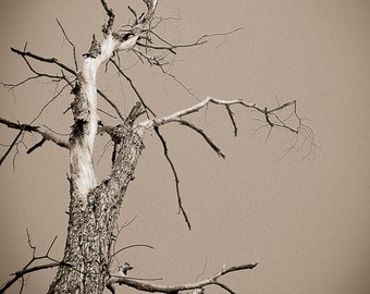 Gnarled tree Photography eerie halloween evil monster shire forest tolkien animated arms folklore - Old Man Willow - fine art photograph