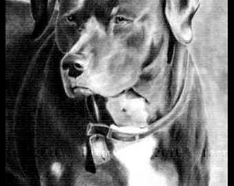 Custom Pet Portrait From Your Photo - 5x7 Original Dog Pencil Sketch Drawing From Picture