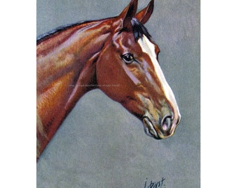 Horse Greeting Card - Warmblood Thoroughbred Equestrian - Rivst Image