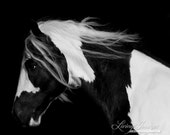 Dark Gypsy - Fine Art Horse Photograph - Horse