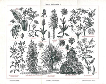 Vintage Botanical Print Black and White Herbalism Medicinal Plants Aloe Arnica