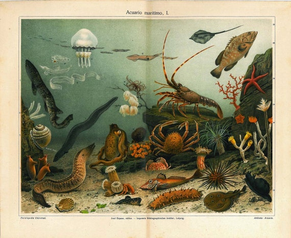 Sea Life  Antique Color Lithograph 1920s  Marine Aquarium