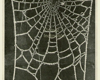 Vintage Antique Print The Spiders Frozen Home book plate