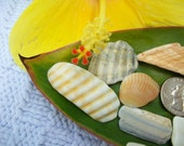 Craft shells, wampum sea shells, coastal home beach decor, jewelry supplies (Lot 138)