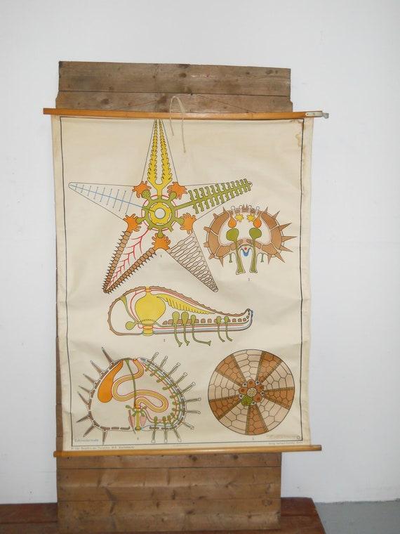 Vintage Starfish School Chart