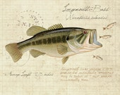 Largemouth Bass -8 x10 inch limited edition print by Matt Patterson, fish print, cabin decor, fishing print