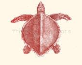 Vintage Turtle Thalassochelys caretta Print Poster  Illustration