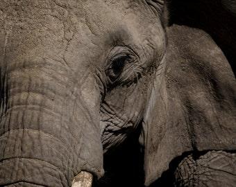 Elephant Safari Photograph Fine Art Wall Decor
