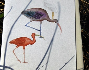 Blank Card Scarlet Glossy and White Ibis in Search Mode - Humorous