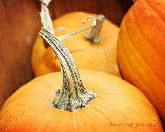 Pumpkin Photo, Harvest Autumn Photography, Thanksgiving Orange Rust Rustic Jack-o-Lantern Pumpkins Stems, Farmers Market Kitchen Photograph