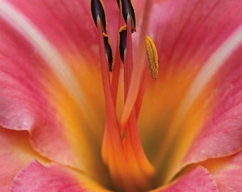 lily macro nature photography - greeting cards - set of 10
