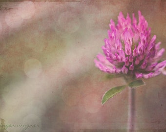 Flower Photography - Pink Clover - 5 x 7 fine art print - nature macro flower clover pink tan beige pastel bokeh rustic home decor