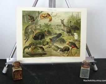 1870s Australian Animal Chromolithograph Print Vibrant Color